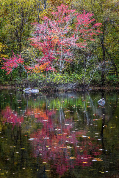 Photograph - Floating In Autumn by Debra and Dave Vanderlaan
