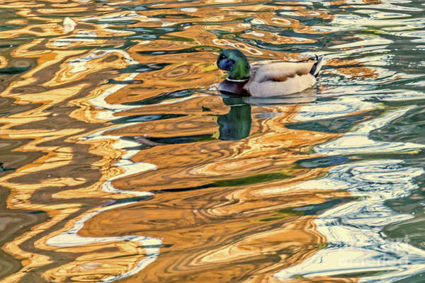 Photograph - Floating In Color by Kate Brown