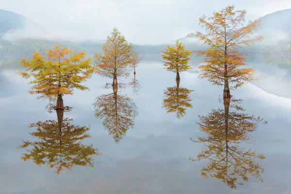 Photograph - Floating Into Fall by Debra and Dave Vanderlaan
