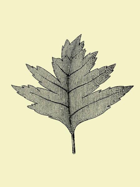 Wall Art - Mixed Media - Floating Leaf I by Naxart Studio