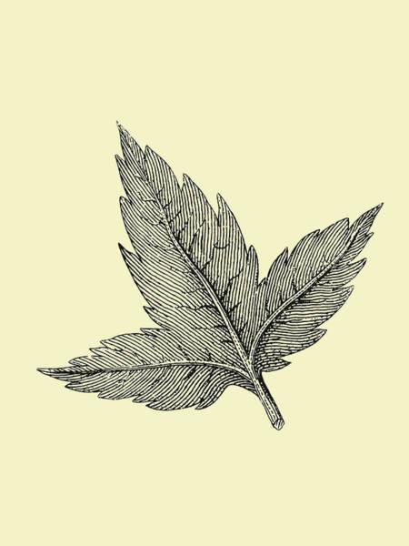 Wall Art - Mixed Media - Floating Leaf by Naxart Studio