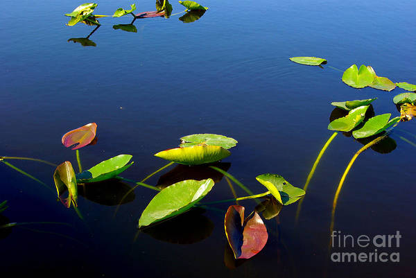 Wall Art - Photograph - Floating Leaves by Zal Latzkovich