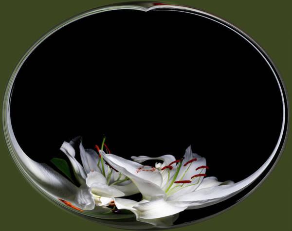 Digital Art - Floating Lily by Cyndy Doty