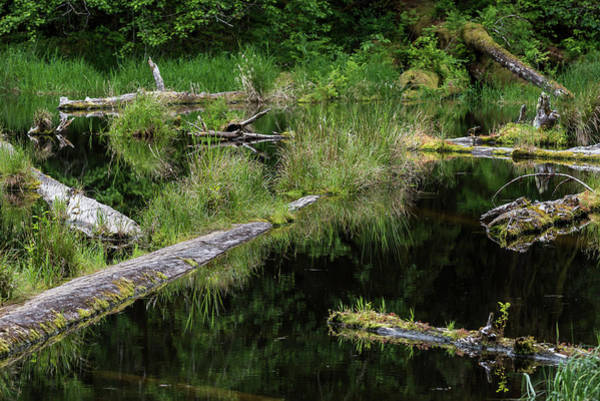 Photograph - Floating Logs And Reflection by Robert Potts