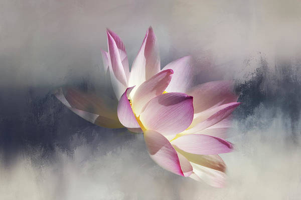 Wall Art - Digital Art - Floating Lotus On Texture by Terry Davis