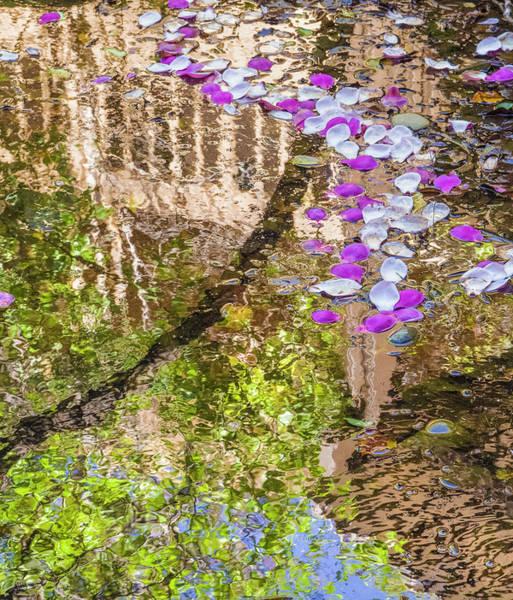 Photograph - Floating Magnolia Petals by Jonathan Hansen