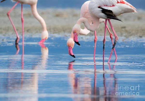 Wall Art - Photograph - Flock Life Wildlife by Roberto Murgia