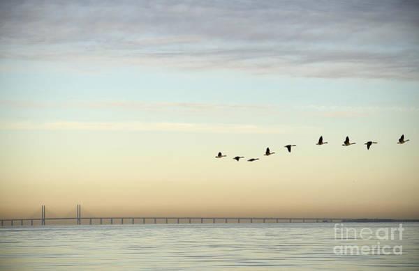 Side Wall Art - Photograph - Flock Of Birds Flying Near Bridge by Bmj