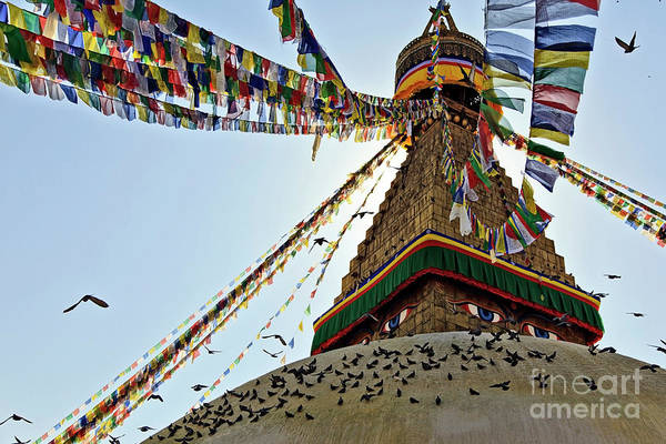 Pilgrimage Wall Art - Photograph - Flock Of Birds On Roof Of Stupa by Basel Chakour
