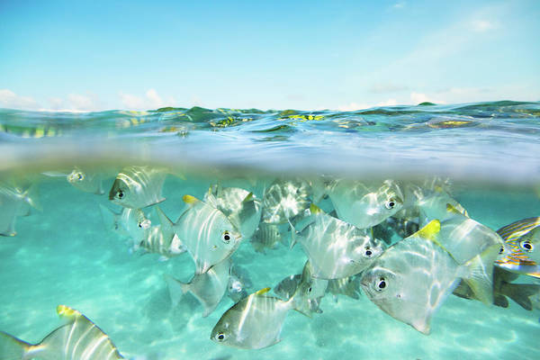 Snorkeling Photograph - Flock Of Fish Under And Above Water by Danilovi