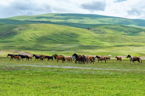 Wall Art - Photograph - Flock Of Horses Equus Running In Naryn Gorge Naryn Region Kyrgyzstan by imageBROKER - GTW
