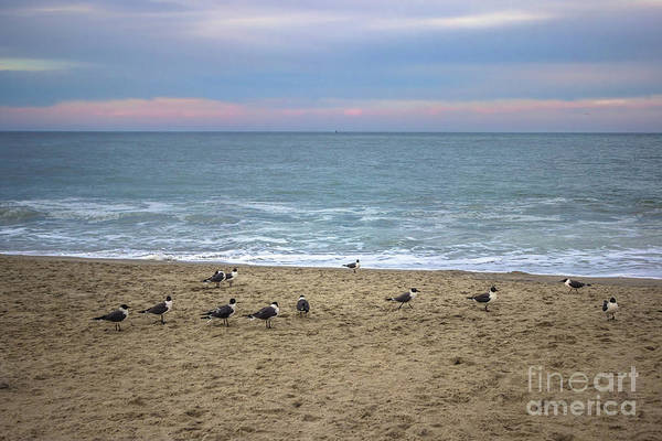 Wall Art - Photograph - Flock Of Seagulls by Colleen Kammerer