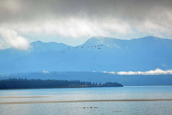 Photograph - Flocks Above And Below On Yellowstone Lake by Bruce Gourley