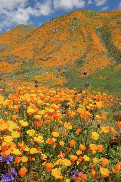 Desert Flowers Wall Art - Photograph - Flora 17 by Ryan Weddle