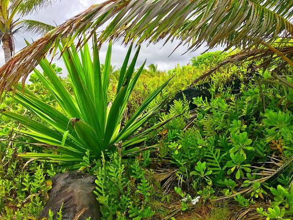 Photograph - Flora Makai Seaview Aloha  by Joalene Young