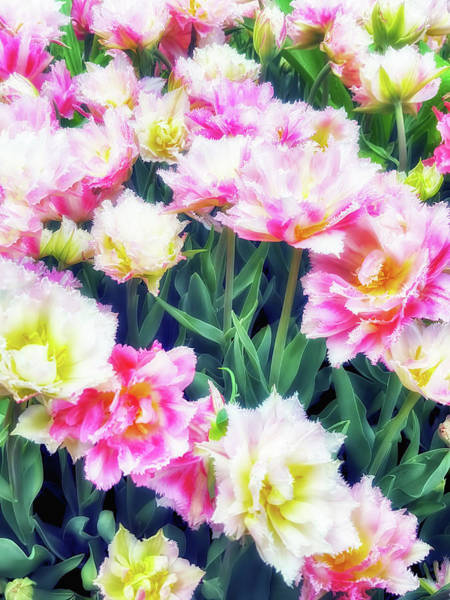 Wall Art - Digital Art - Floral Art 22 by Tina Baxter