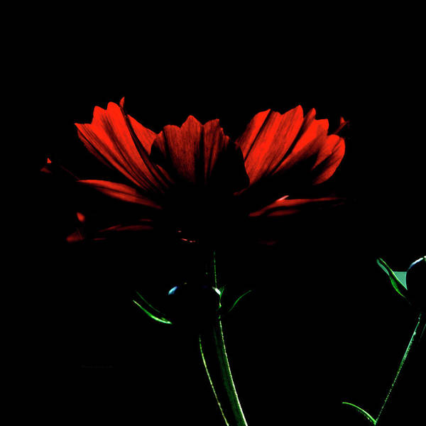 Wall Art - Photograph - Floral By Moon Light Sq Format by Thomas Woolworth
