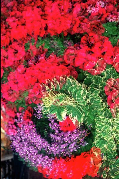Wall Art - Photograph - Floral Circle Pattern by David Smith