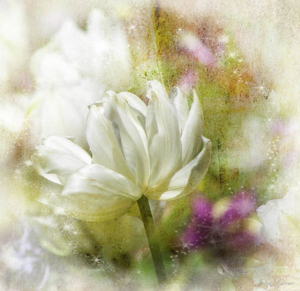 Photograph - Floral Dust by John Rivera