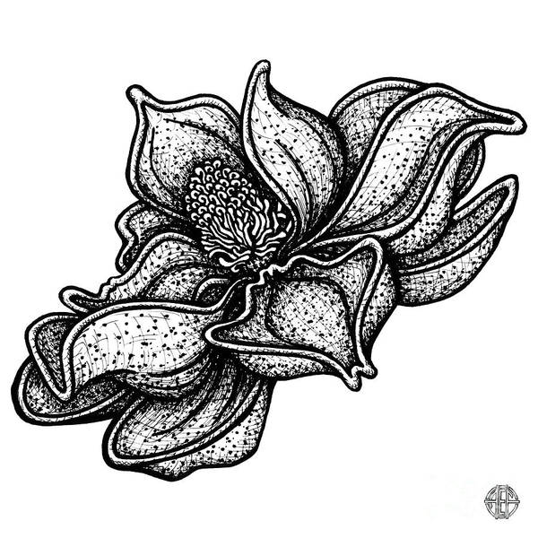 Drawing - Floral Icon 35 by Amy E Fraser