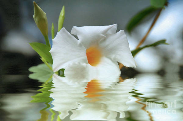 Wall Art - Photograph - Floral In Water by Elaine Manley