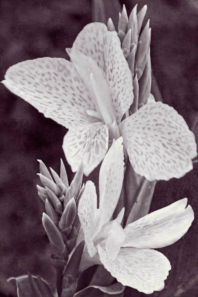 Photograph - Floral Memories II by Leda Robertson