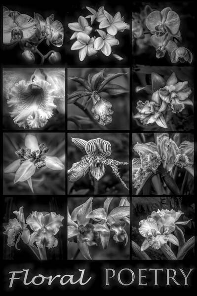 Photograph - Floral Poetry In Black And White by Debra and Dave Vanderlaan