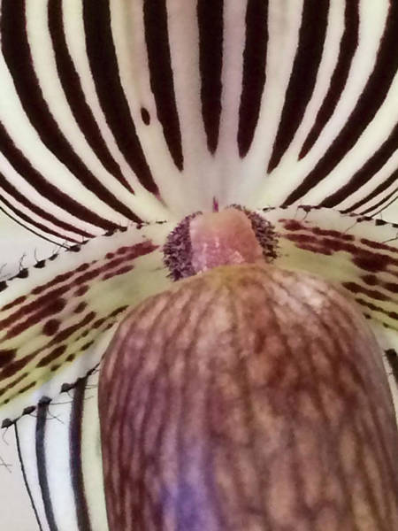 Flora_orchid_7568_15 Art Print