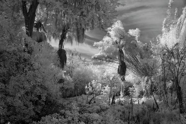 Wall Art - Photograph - Florida Backyard by Amy Curtis