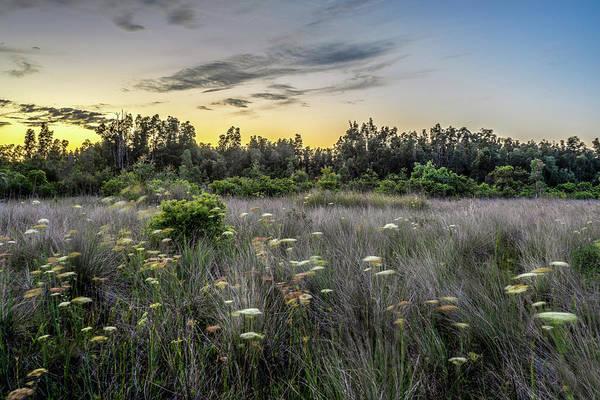 Desolation Photograph - Florida Everglades Wild Flowers  by Manuel Lopez