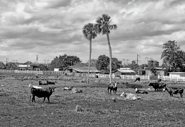 Photograph - Florida Farmscape by Karl Ford