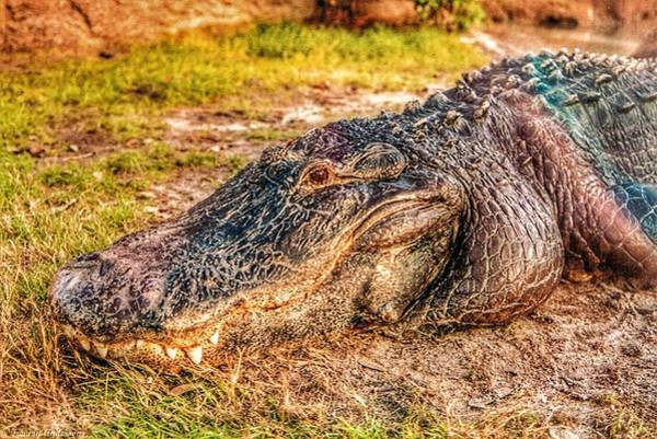 I-75 Photograph - Florida Gator 1 by Tommy Anderson