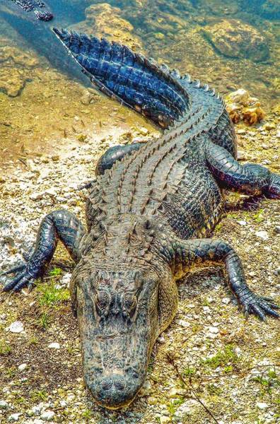 I-75 Photograph - Florida Gator 2 by Tommy Anderson