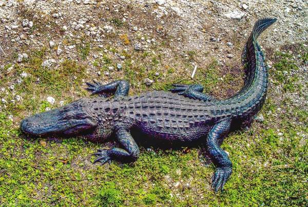 I-75 Photograph - Florida Gator 3 by Tommy Anderson