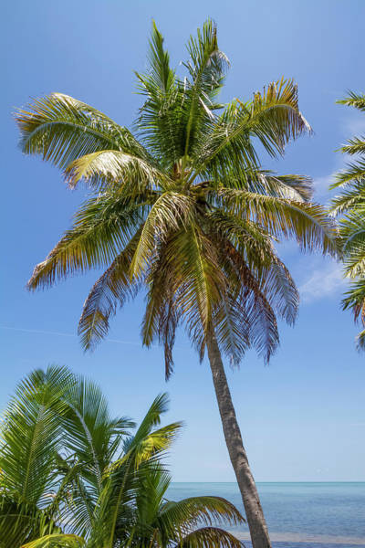Wall Art - Photograph - Florida Keys Palm Tree Ocean View by Melanie Viola