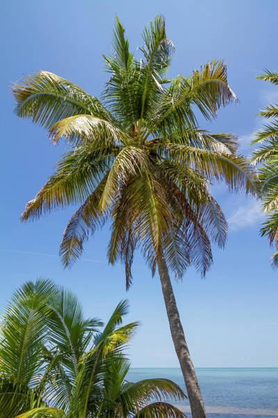 Wall Art - Photograph - Florida Keys Palm Tree Ocean View by Melanie Viola