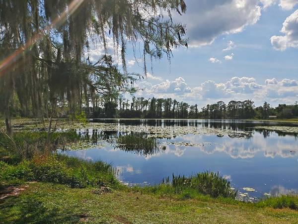 Gator Photograph - Florida Lake by Dado