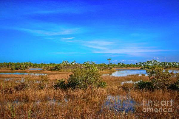 Photograph - Florida Marsh Land by Tom Claud