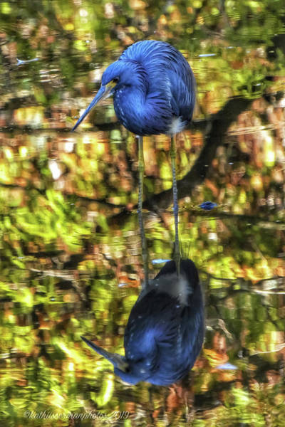 Wall Art - Photograph - Florida Reflections by Kathi Isserman