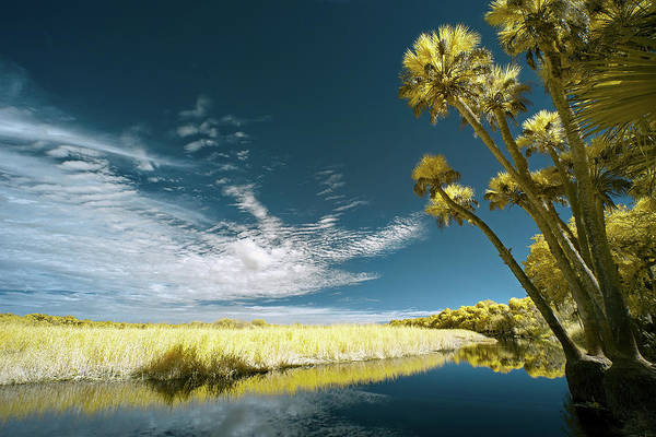 Wall Art - Photograph - Florida State Park by Jon Glaser