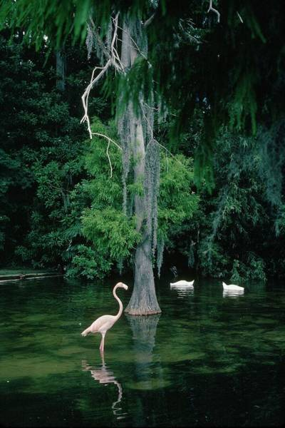 Wall Art - Photograph - Florida, United States - by Francois Le Diascorn