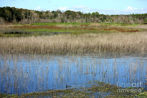 Wall Art - Photograph - Florida Wetlands Landscape by Carol Groenen