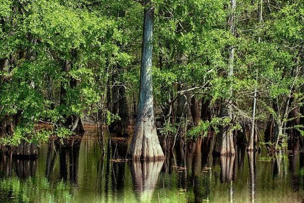 Wall Art - Photograph - Florida's  Wetlands by Louis Ferreira
