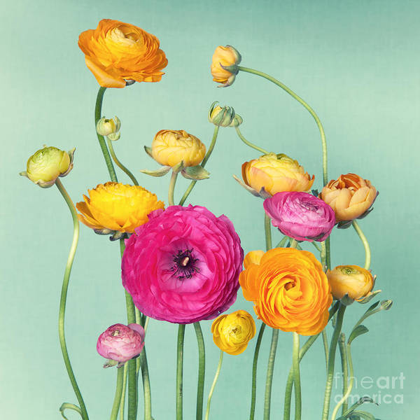 Wall Art - Photograph - Flower Arrangement Of Colorful by Ilight Photo