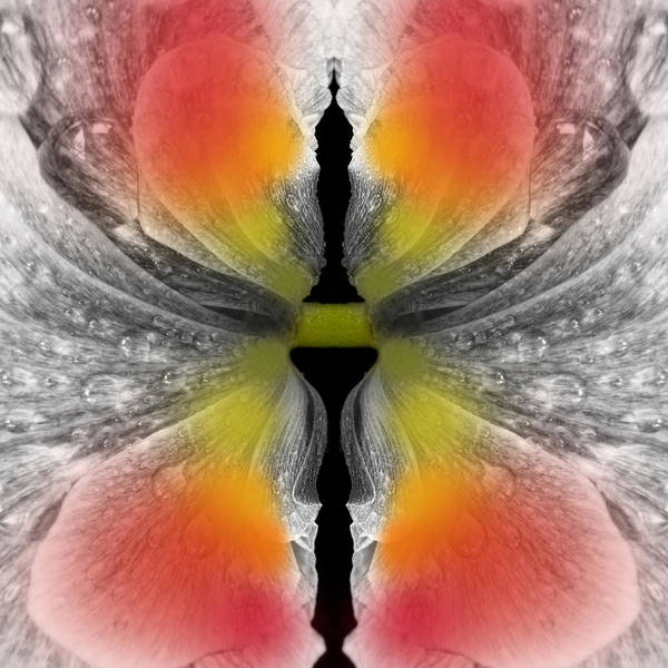 Butterfly On Flower Digital Art - Flower Becoming A Butterfly by Jipsi Immanuelle