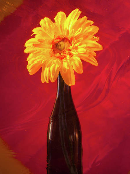 Photograph - Flower Bottle by Stewart Helberg