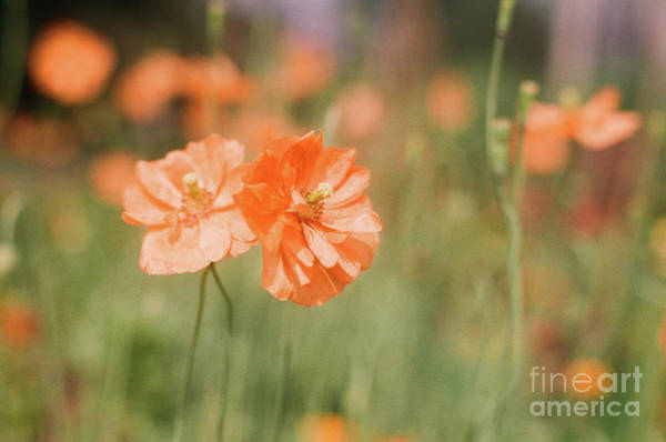 Photograph - Flower Buddies by Ana V Ramirez