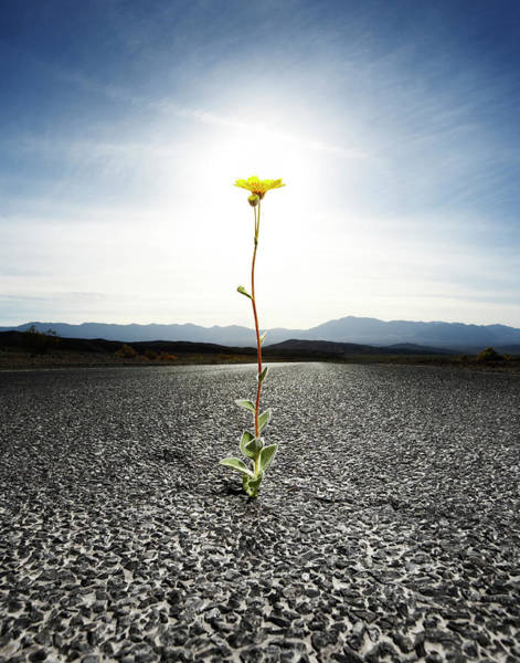 Determination Photograph - Flower Coming From Crack In Pavement Of by Thomas Northcut