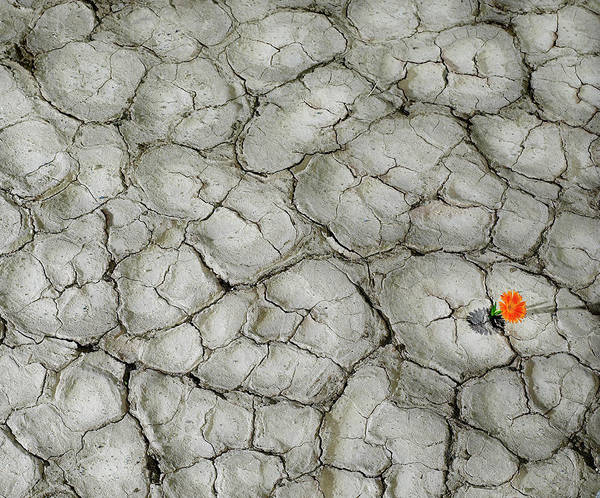 Cracked Photograph - Flower Coming Out Of Cracked Desert by Ryan Mcvay