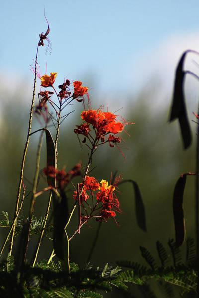Photograph - Flower Detail by Chance Kafka